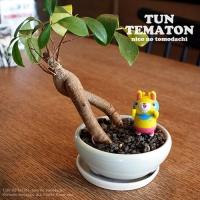 【size S】TUN TEMATON(テュン テマトン)