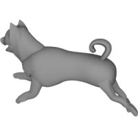 走る犬(柴犬)