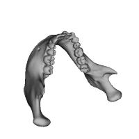 下あごの骨.OBJ