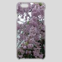 iPhone6ケース 桜