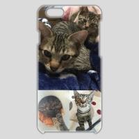 iPhone6ケース 猫2