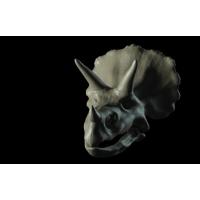 トリケラトプスのドクロ