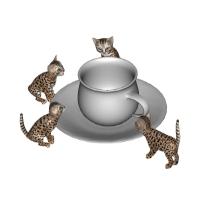 Cats & Milk.zip