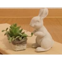rabbit <うさぎ>