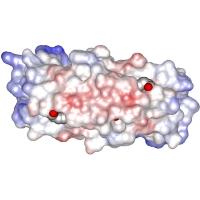 7hvp HIV-1プロテアーゼ‐JG-365複合体 500万倍