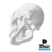 頭がい骨の模型