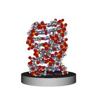DNA三量体分子模型 大きめ 台座付き