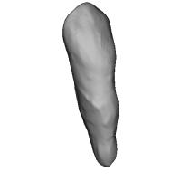 上顎犬歯 Canine(ケイナイン)Tooth(トゥース)STLデータ Upper-3.stl
