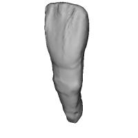 上顎中切歯 Incisor(インサイザー)Tooth(トゥース)STLデータ