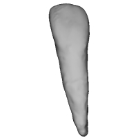 上顎側切歯 Lateral Incisor(ラテラルインサイザー)Upper-2.stl