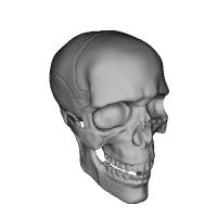 男性頭骨1