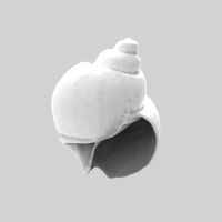 Shell E