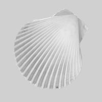 Shell C