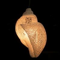 Lamp-Shell