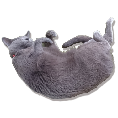 どこでも猫抱っこTシャツ Sサイズ