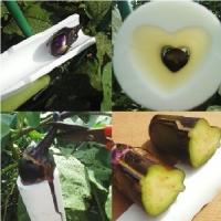 野菜の成長過程で形状を強制する型A ※AとBで対になっています